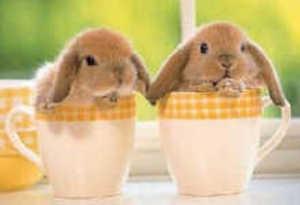Baby_bunnies_3