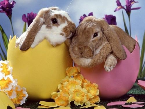 Easter_bunnies_2